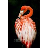 Karo-art Schilderij - Flamingo , Multikleur, 3 maten , Premium print