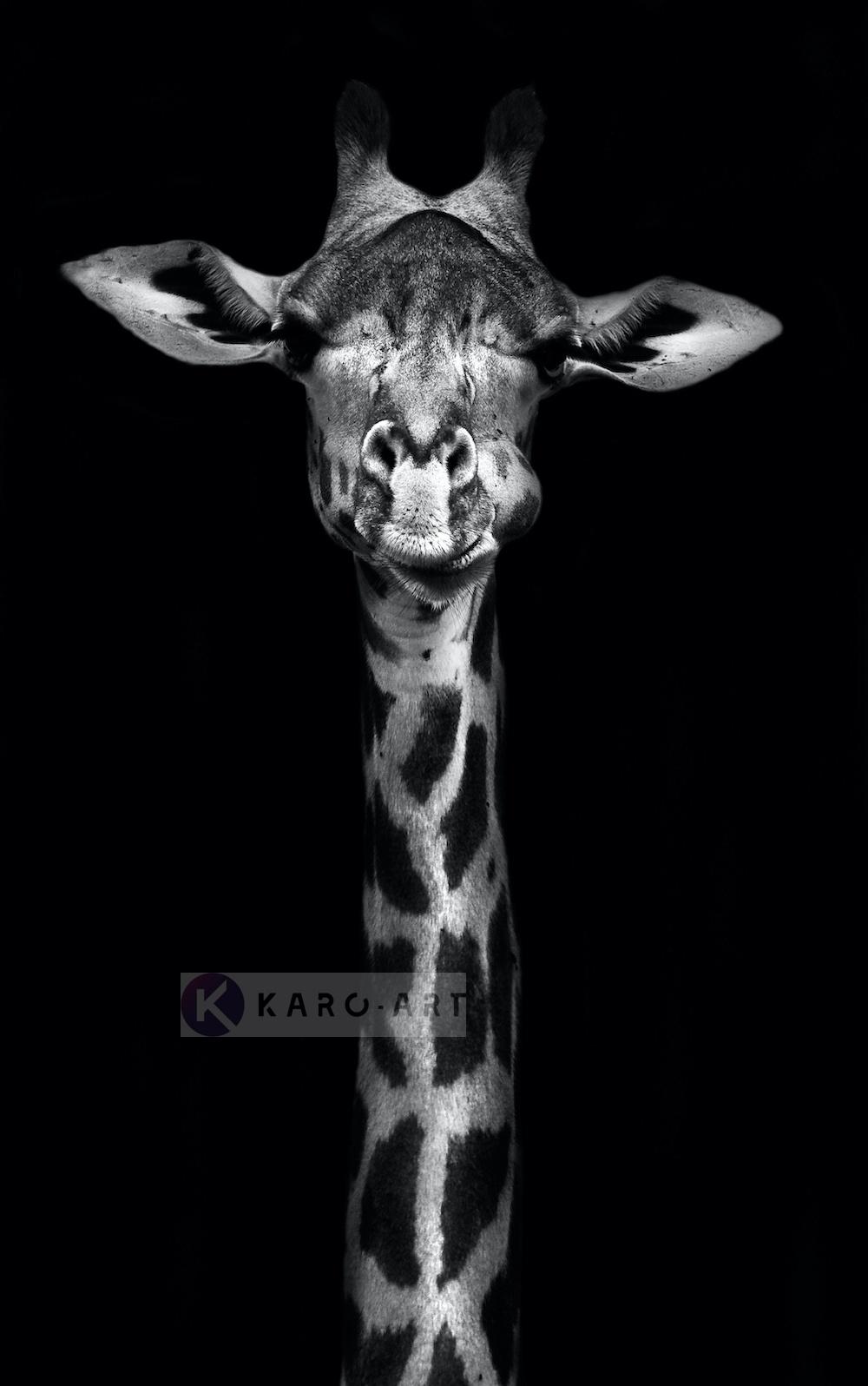 Schilderij - Giraf