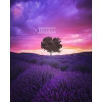 Karo-art Afbeelding op acrylglas - Lavendelveld