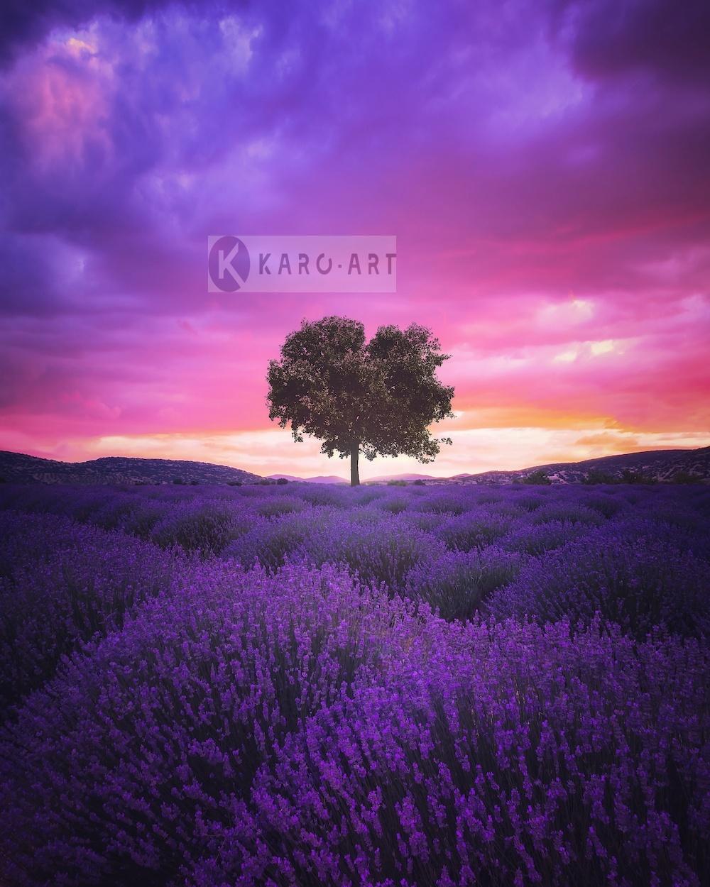 Afbeelding op acrylglas - Lavendelveld