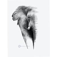 Karo-art Afbeelding op acrylglas - Olifant op witte achtergrond