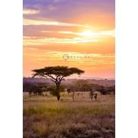 Karo-art Afbeelding op acrylglas - Afrikaanse Savanne