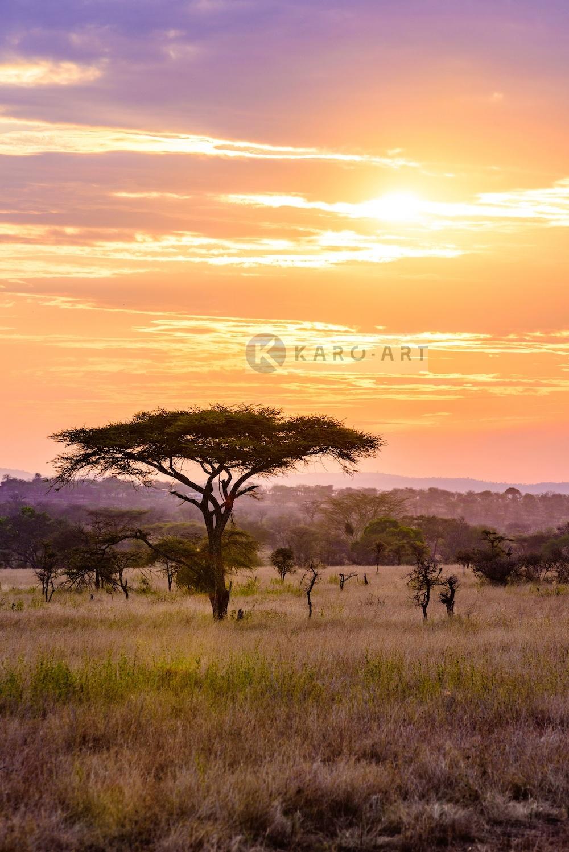 Afbeelding op acrylglas - Afrikaanse Savanne