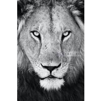 Karo-art Schilderij - Leeuw ,Zwart wit , 3 maten , Premium Print