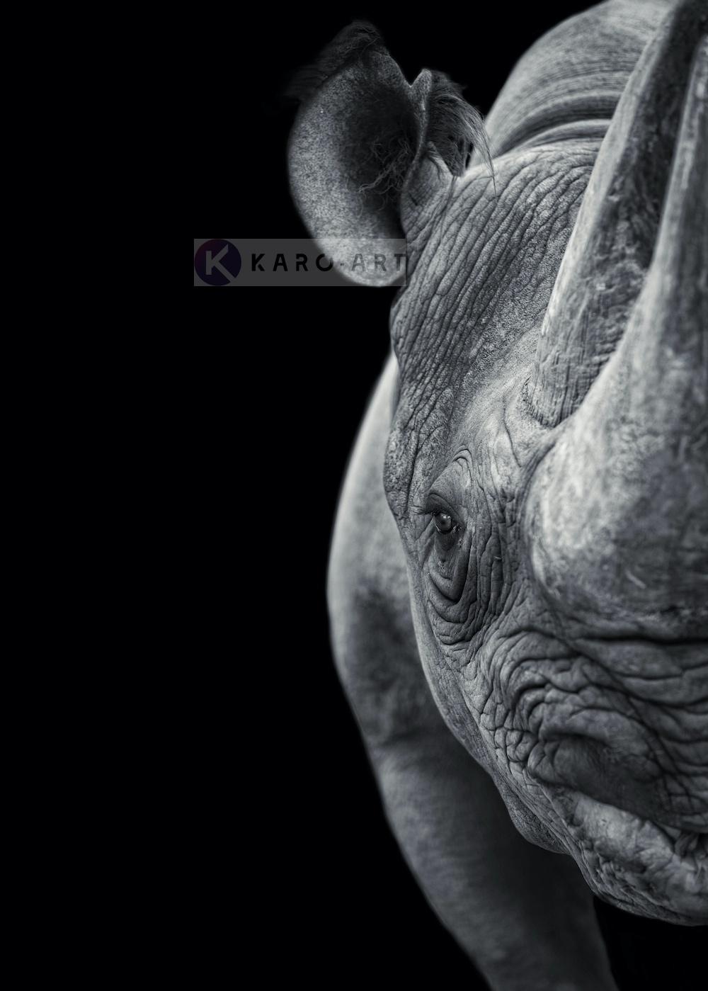Afbeelding op acrylglas - Neushoorn