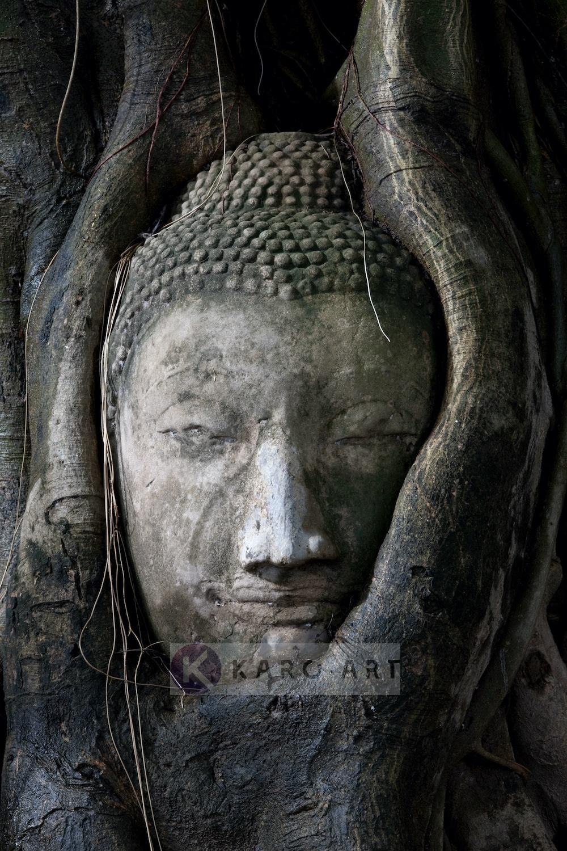 Schilderij - Boeddha in boom , Zwart grijs , 3 maten , Wanddecoratie