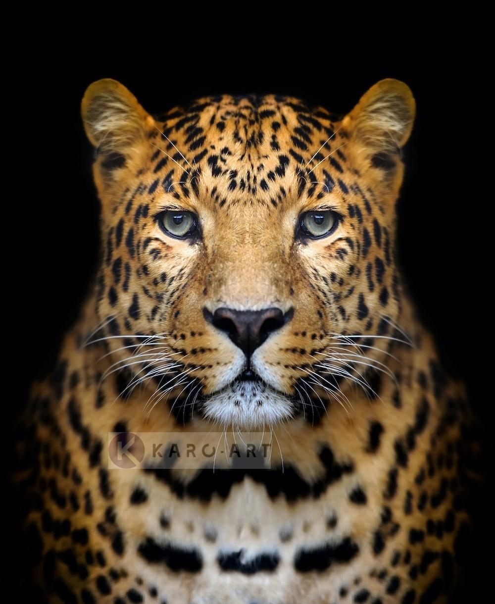 Afbeelding op acrylglas - Luipaard