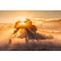 Karo-art Schilderij - Zonsopkomst door de bomen , Oranje bruin , 3 maten , Wanddecoratie