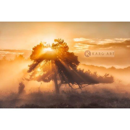 Karo-art Afbeelding op acrylglas - Zonsopkomst door de bomen