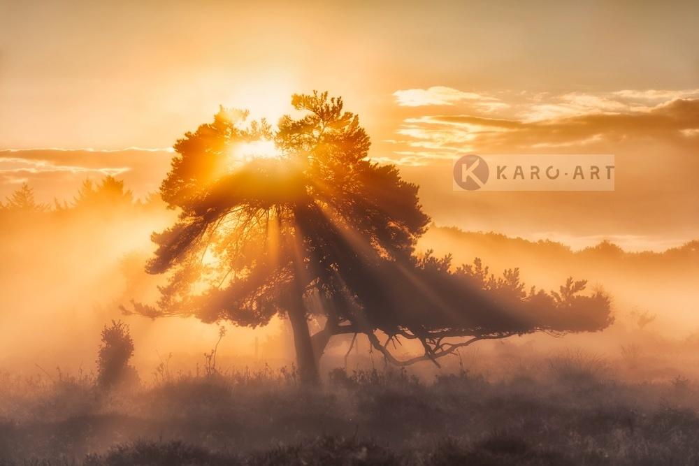 Afbeelding op acrylglas - Zonsopkomst door de bomen