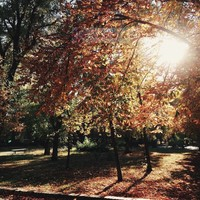Karo-art Schilderij - Park in de herfst , Bruin groen , 3 maten , Wanddecoratie