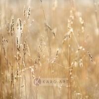 Karo-art Schilderij - Mist in het veld , Beige geel , 3 maten , Premium print