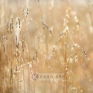 Karo-art Schilderij - Mist in het veld