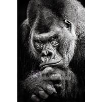 Karo-art Schilderij - Gorilla , Zwart wit , 3 maten , Premium print
