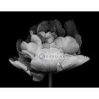Karo-art Schilderij - Dubbele Tulp , Zwart wit , 3 maten , Premium print