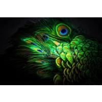 Karo-art Schilderij - Pauw veren , Multikleur , 3 maten , Premium print