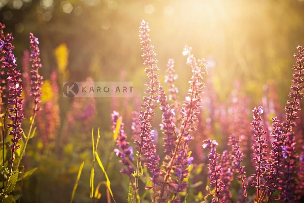 Afbeelding op acrylglas - Wilde Bloemen