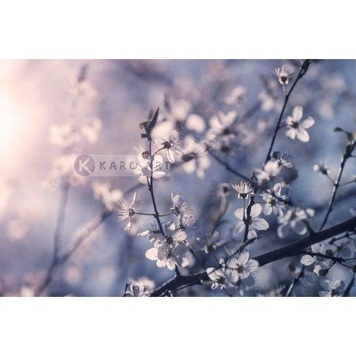 Karo-art Afbeelding op acrylglas - Kersenbloesem Tak