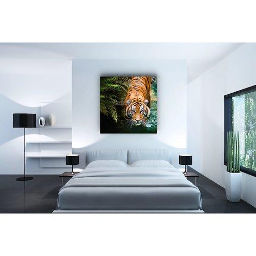 Karo-art Afbeelding op acrylglas - Sluipende Tijger