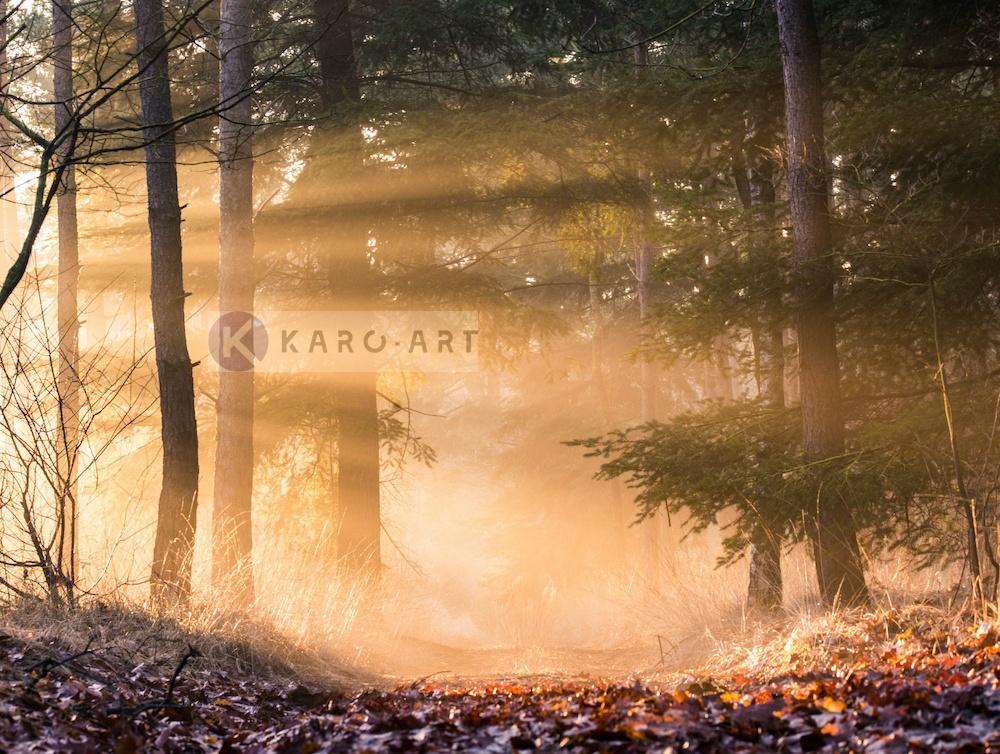 Afbeelding op acrylglas - Ochtend door de bomen