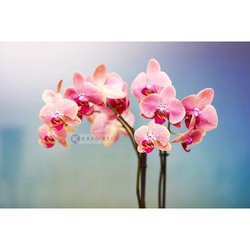 Karo-art Schilderij - Orchidee