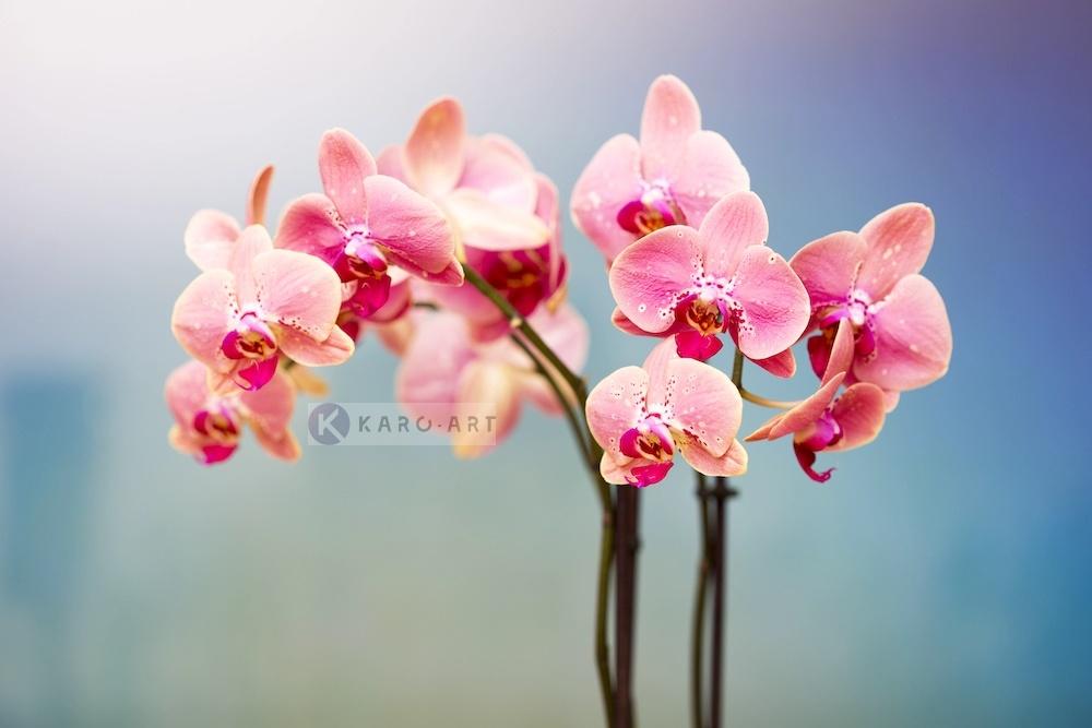 Karo-art Schilderij - Orchidee , Multikleur , 3 maten , Wanddecoratie