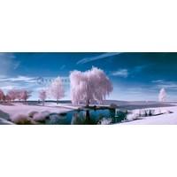Karo-art Schilderij - Roze bomen, roze/blauw, 2 maten , print op canvas, premium print