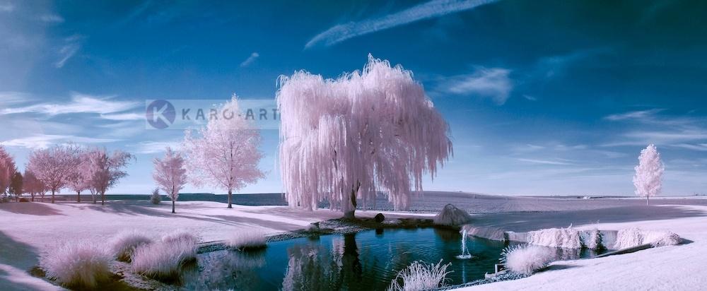 Schilderij - Roze bomen, roze/blauw, 2 maten , print op canvas, premium print