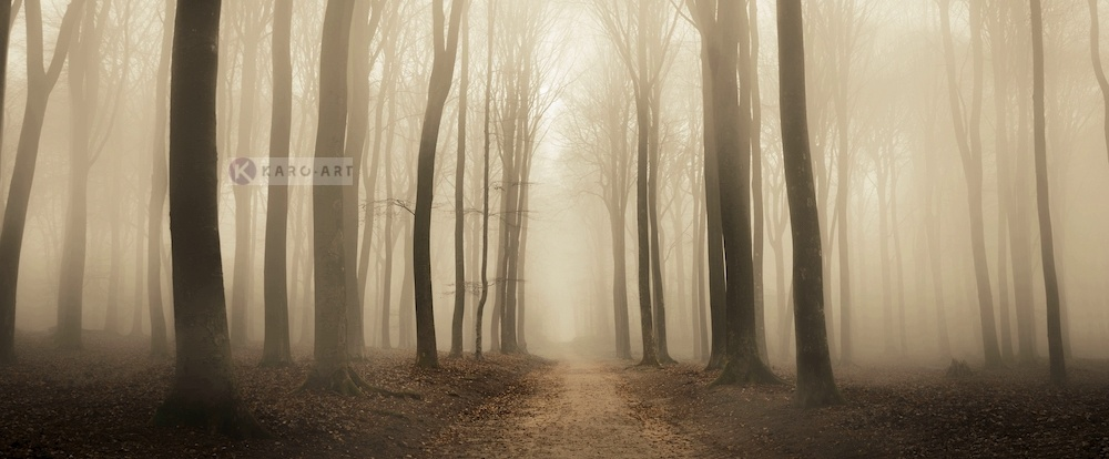 Schilderij - Mistig bos, Beige Bruin , 2 maten , print op canvas, premium print