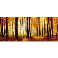 Karo-art Schilderij - Bos in de herfst, Multikleur , 2 maten , print op canvas, premium print
