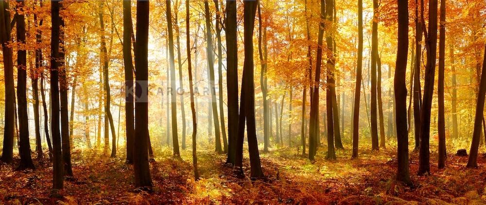 Schilderij - Bos in de herfst, print op canvas, premium print