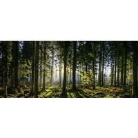 Karo-art Schilderij - Panorama bos, groen/zwart, 2 maten , print op canvas, premium print