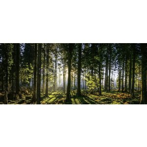 Karo-art Schilderij - Panorama bos