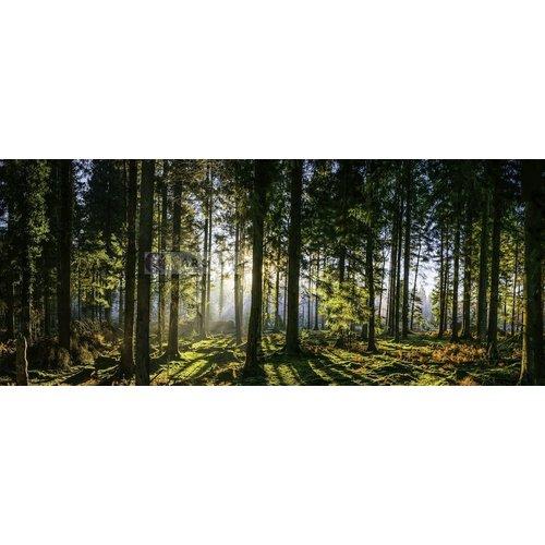 Karo-art Schilderij - Panorama bos, groen/zwart, print op canvas, premium print