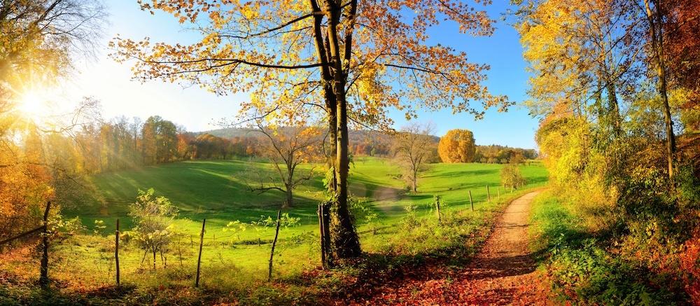 Schilderij - Herfst, panorama, groen,blauw ,2 maten , `premium Print