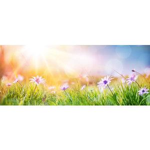 Karo-art Schilderij - Margrieten in het veld, panorama, groen, roze,blauw