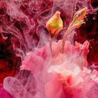 Karo-art Schilderij - Abstracte bloemknop, roze, geel