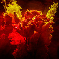 Karo-art Schilderij - Rozen in kleurrijk water, rood,geel
