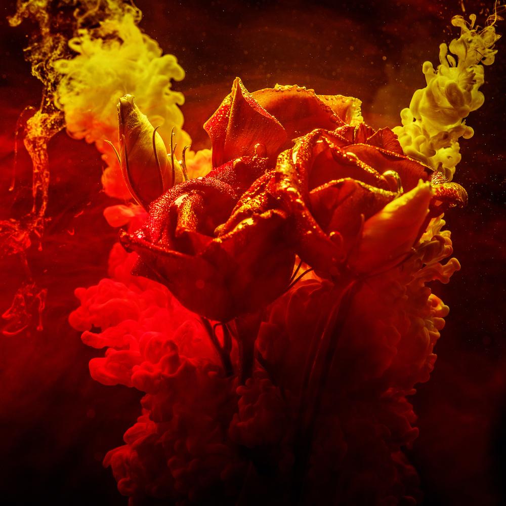 Schilderij - Rozen in kleurrijk water, rood,geel