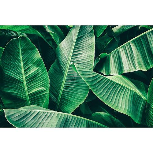 Karo-art Fotobehang - bananenblad, groen