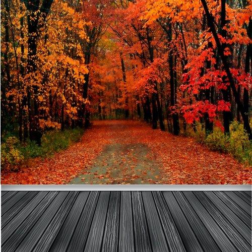 Karo-art Fotobehang- Herfst bos, wandeling