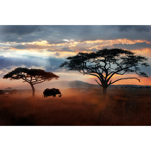 Karo-art Fotobehang- Olifant op de Savanne, Afrika