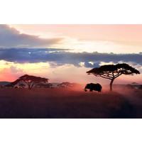 Karo-art Fotobehang- Olifant op de Savanne, Afrika II