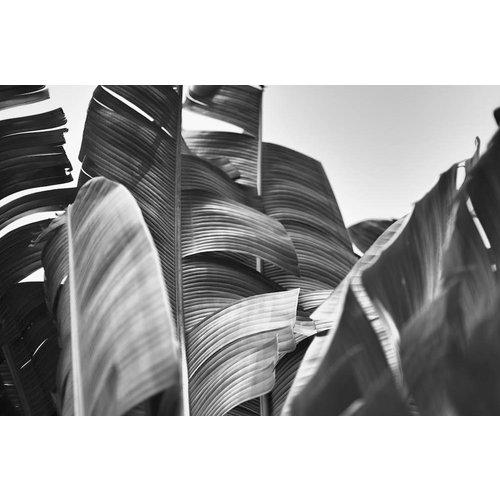 Karo-art Fotobehang - Bananenblad Zwart-Wit