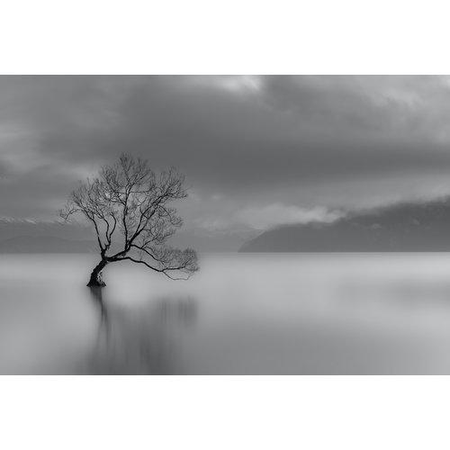 Karo-art Fotobehang - Eenzame boom