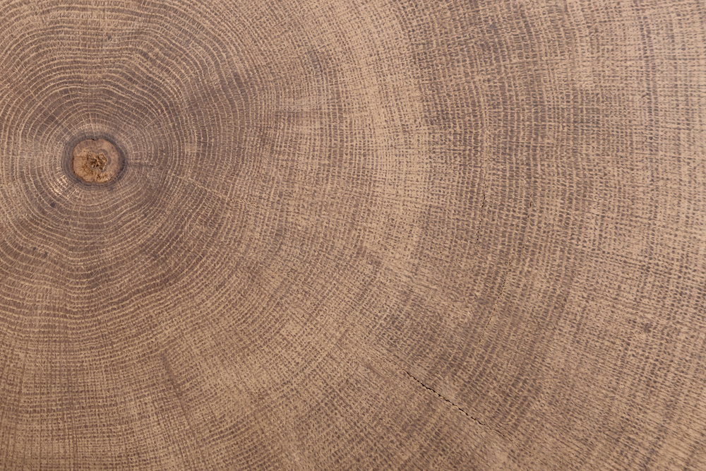 Karo-art Fotobehang - Doorsnede boom