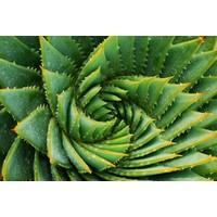 Karo-art Fotobehang - Cactus