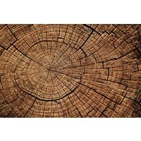 Karo-art Fotobehang - Doorsnede boom II