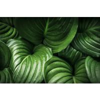 Karo-art Fotobehang - Groene bladeren