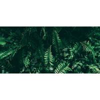 Karo-art Fotobehang - Jungle